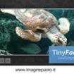 TinyFader: Ancora uno slider in Javascript, ma Senza Libreria jQuery