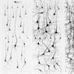 Io sono fatto così! Una convinzione limitante perchè non conosci la neuroplasticità.
